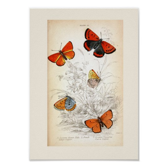 Vintage Butterfly Art Poster