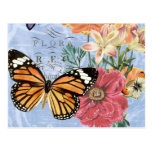 Vintage Butterfly Flora...postcard Postcard