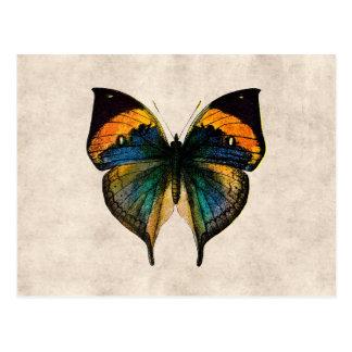 Vintage Butterfly Illustration 1800 s Butterflies Postcard
