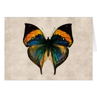 Vintage Butterfly Illustration 1800's Butterflies Stationery Note Card