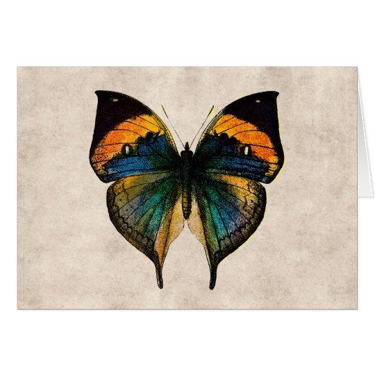Vintage Butterfly Illustration 1800's Butterflies Card