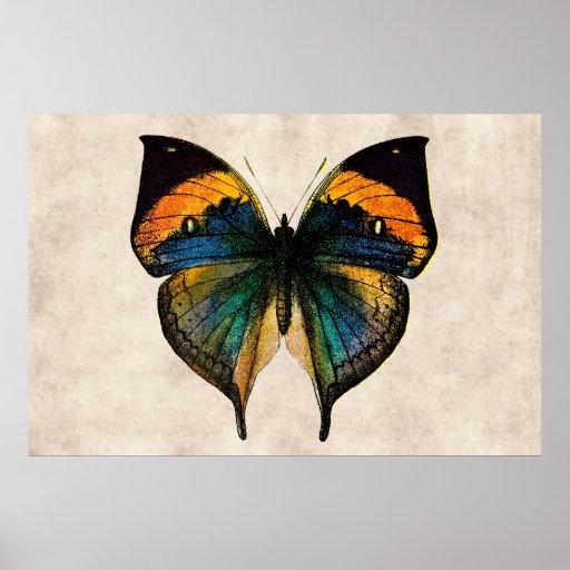 Vintage Butterfly Illustration 1800's Butterflies Print