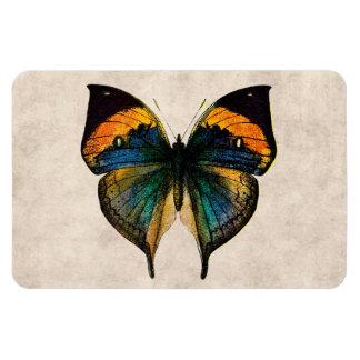 Vintage Butterfly Illustration 1800's Butterflies Rectangular Photo Magnet