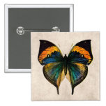 Vintage Butterfly Illustration - Butterflies Pinback Button