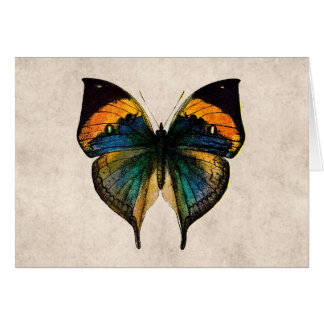 Vintage Butterfly Illustration - Butterflies Stationery Note Card