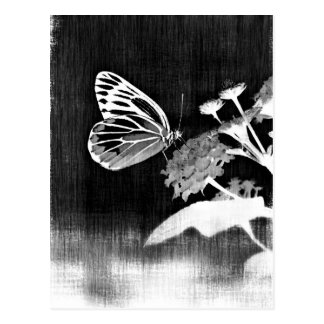 Vintage Butterfly on flower - Black and White PostcardVintage Butterfly Black And White