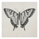 Vintage Butterfly Personalized Butterflies Insects Poster