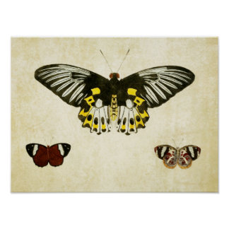 Vintage Butterfly Print 136