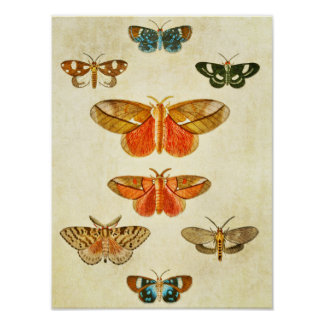 Vintage Butterfly Print 369