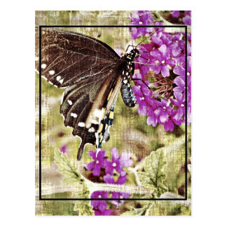 Vintage Butterfly with Flower Postcard