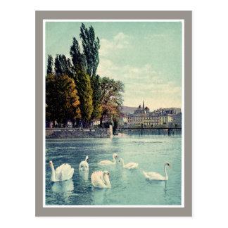 Vintage c. 1900 Geneva Swans at the Ile Rousseau Postcards
