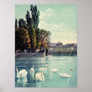 Vintage c. 1900 Geneva Swans at the Ile Rousseau Poster