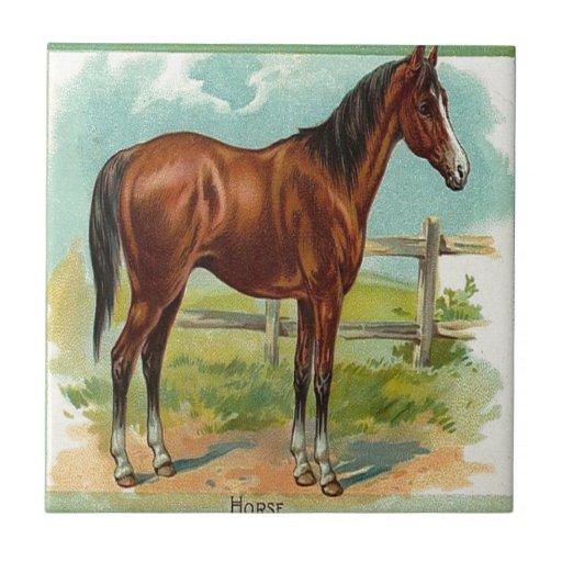 Vintage, caballo de Brown Tejas