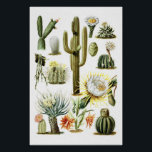 "Vintage Cactus Botanical Illustration Poster<br><div class=""desc"">Beautiful vintage cactus botanical illustration from 1903.</div>"