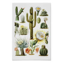 Vintage Cactus Botanical Illustration Poster