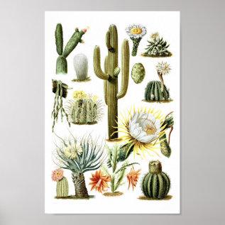 Vintage Cactus Botanical Illustration Poster at Zazzle