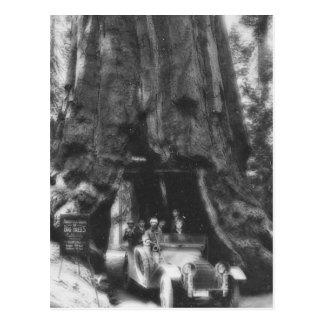 Vintage California de la linterna mágica del árbol Postales