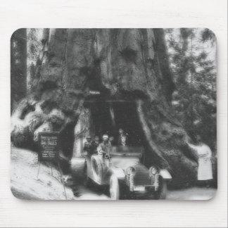 Vintage California de la linterna mágica del árbol Tapete De Raton