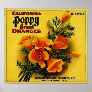 Vintage California Poppy Oranges Poster