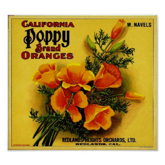 Vintage California Poppy Oranges Posters