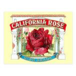 Vintage California Rose Floral Postcard