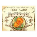 Vintage California State Flower Postcard