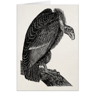 Vintage Californian Vulture Bird - Birds Template