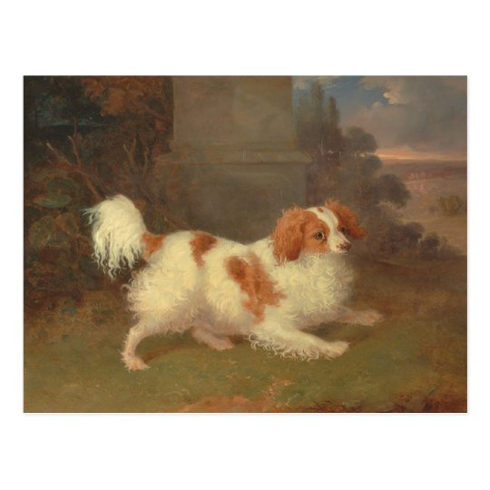 Vintage Calvalier King Charles Spaniel Painting Postcard