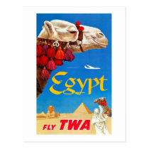 Vintage Camel and Pyramids Postcard