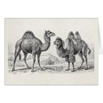 Vintage Camel Illustration - Retro Antique Camels