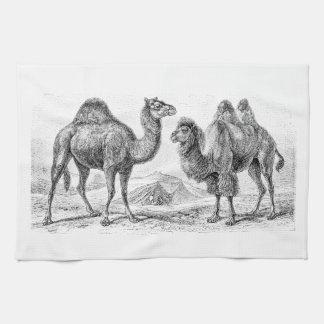 Vintage Camel Illustration - Retro Antique Camels Kitchen Towels