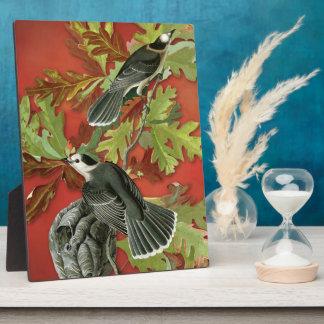Vintage Canadá/ejemplo de Jay gris (Audubon) Placa