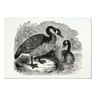 Vintage Canadian Goose Bird - Geese Birds Template Card