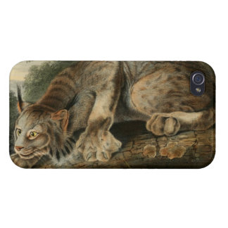 Vintage Canadian Lynx Illustration iPhone 4 Covers
