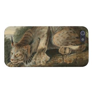 Vintage Canadian Lynx Illustration iPhone 5 Cases