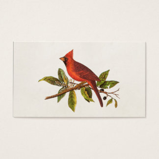 Vintage Cardinal Song Bird Illustration - 1800's Business Card
