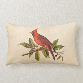 Vintage Cardinal Song Bird Illustration - 1800's Lumbar Pillow