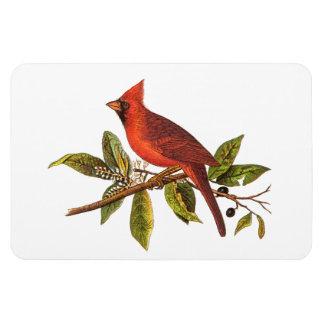 Vintage Cardinal Song Bird Illustration - 1800's Vinyl Magnet
