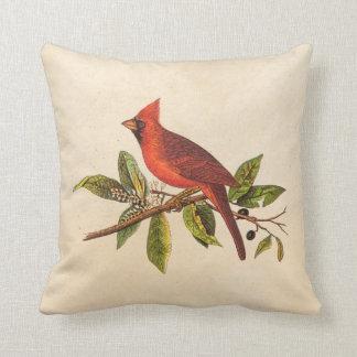 Vintage Cardinal Song Bird Illustration - 1800's Throw Pillow