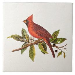 Vintage Cardinal Song Bird Illustration - 1800's Tile