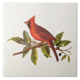 Vintage Cardinal Song Bird Illustration - 1800's Large Square Tile