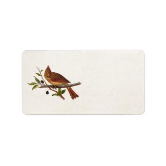 Vintage Cardinal Song Bird Illustration - Female Label