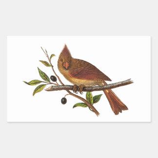 Vintage Cardinal Song Bird Illustration - Female Rectangular Sticker
