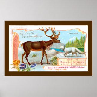 Vintage Caribou (Reindeer) and Arctic Fox Print