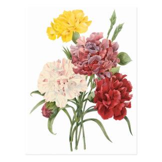 Vintage Carnations Dianthus Garden Flowers Redoute Postcard