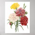 Vintage Carnations Dianthus Garden Flowers Redoute Print