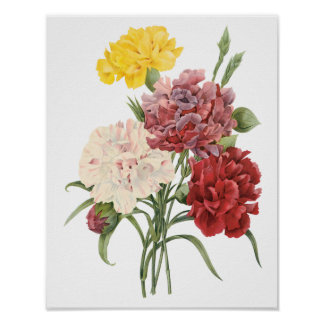 Vintage Carnations Dianthus Garden Flowers Redoute Poster
