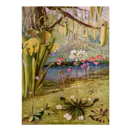 Vintage - Carnivorous Plants Poster