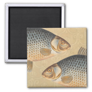 Vintage Carp Freshwater Fish Drawing 2 Inch Square Magnet