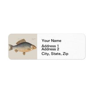 Vintage Carp Freshwater Fish Drawing Label